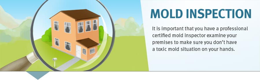 A professional mold inspection is important to prevent toxic mold.