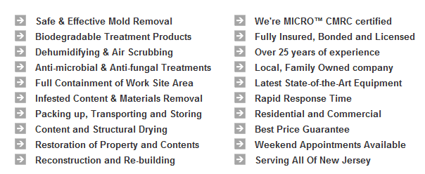Mold Removal Fair Haven, Monmouth County New Jersey 07704