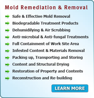 Mold Remediation and Removal services in New Jersey
