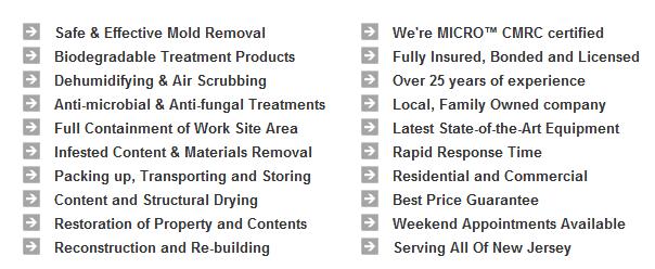 Mold Removal Center Moriches, Suffolk County New York 11934, 11955