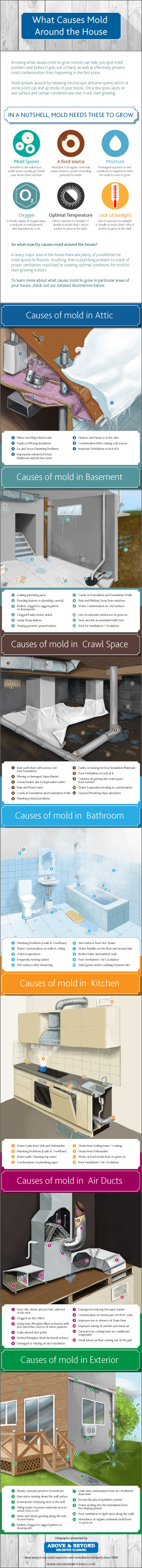 Inforaphic: What causes mold around the house